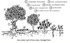 Die Waldgartenschichten
